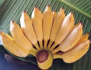 Photo of Гастрит і банани: наскільки вони сумісні?