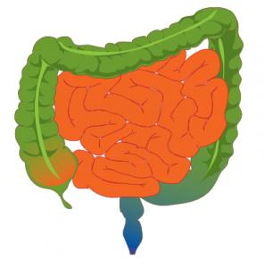 Photo of дисбактеріоз кишечника