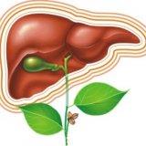 Photo of Лікування печінки натуральними засобами