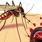 Photo of Симптоми малярії та причини її виникнення