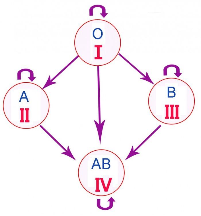 Photo of Відкриті взаємозв'язки між групою крові та хворобами