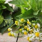 Photo of Лікарські трави рецепти застосування протипоказання