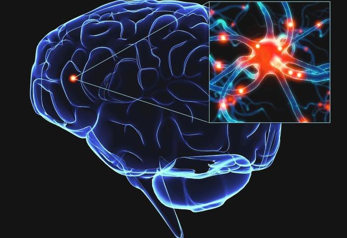Photo of Свинячі клітини як терапія хвороби Паркінсона