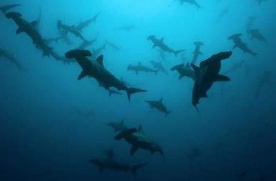 Photo of Вчені навчилися застосовувати клітини акули для боротьби з раком