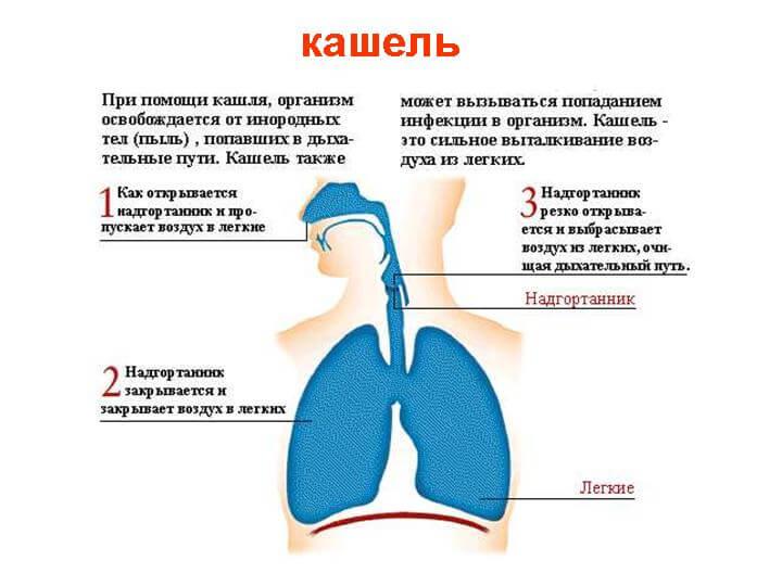 Как лечить сухой непроходящий кашель у ребенка