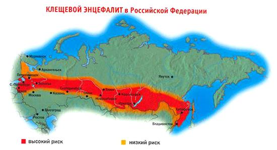 эндемиологическая ситуация в РФ по клещевому энцефалиту