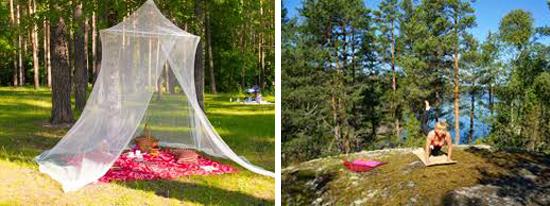 открытые участки без высокой травы - лучший выбор для пикника