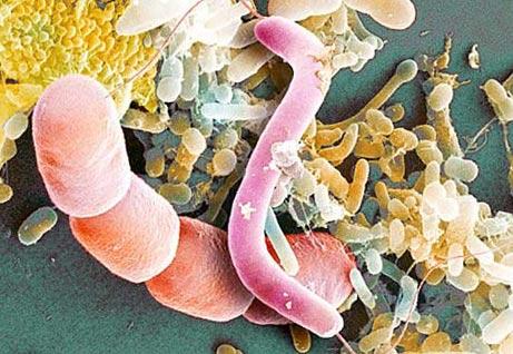 микробы - хозяева Земли