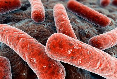 палочки Коха - возбудители туберкулеза